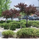 Shopping Center Property Maintenance picture